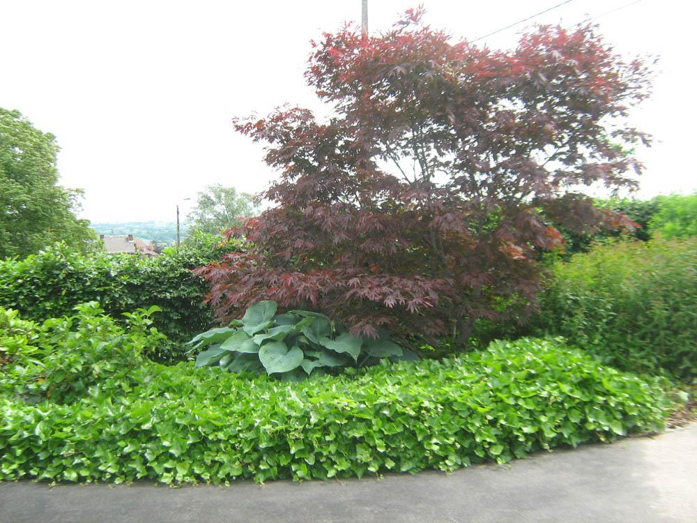 0056-plantations-deco