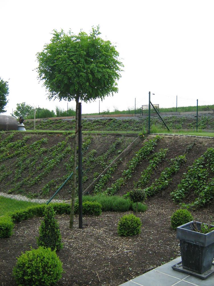 0125-plantations-deco
